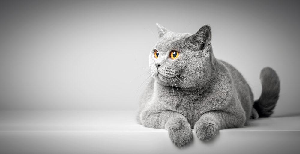猫のペット保険とは?