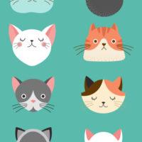 FPがおすすめする猫のペット保険ランキング。そもそも必要なのかも合わせてご紹介