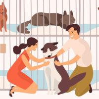 FPがおすすめ!高齢犬・猫のペット保険をランキング形式でご紹介☆