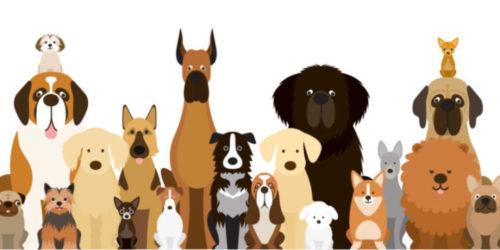犬のペット保険はどこがいい?FP厳選・犬のペット保険人気ランキングをご紹介!