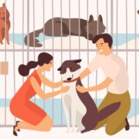 FPが厳選!高齢犬・猫におすすめのペット保険をランキング形式でご紹介☆
