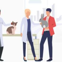 【2020最新】うさぎにおすすめのペット保険3選!評判&プランをFPが徹底比較