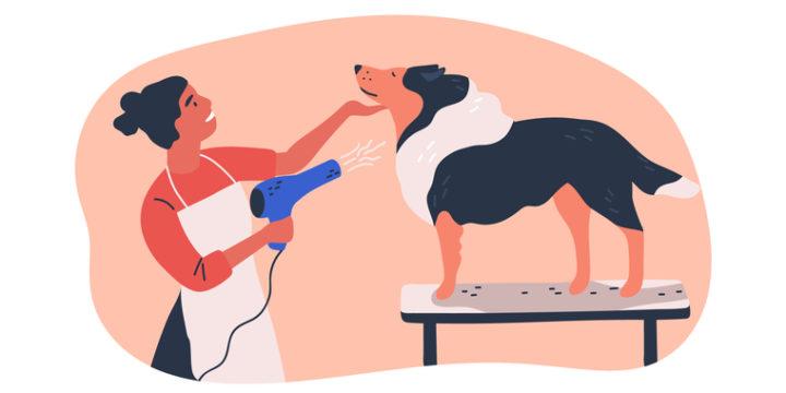 ペット保険付帯のサービス