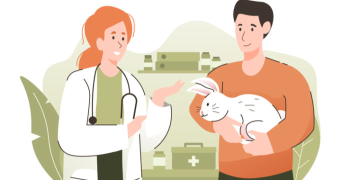 うさぎが加入するのにおすすめのペット保険比較